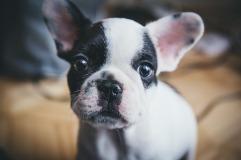 dog-1557287_960_720